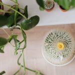 rosliny doniczkowe łatwe w uprawie